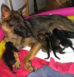 Ginny und Schäferhund-Mama